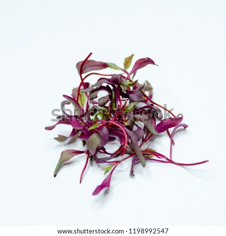 Beet sprouts - Micro greens - Baby beet greens artistically displayed on a white background.