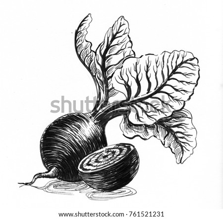 Beet vegetable. Ink black and white illustration.