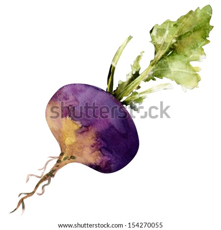 beet with leaf, watercolor painting on white background