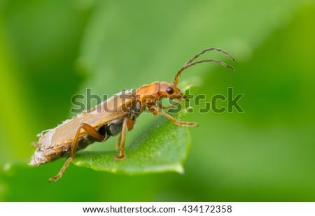 Beetle #434172358