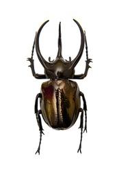 Beetle Chalcosoma Atlas