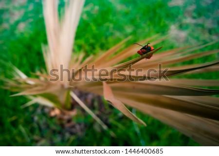 Beetle, (coleoptera) Orange and Black #1446400685