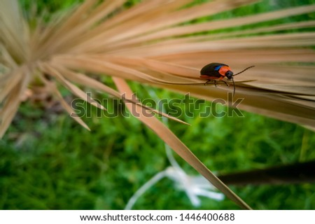 Beetle, (coleoptera) Orange and Black #1446400688