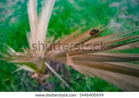 Beetle, (coleoptera) Orange and Black #1446400694