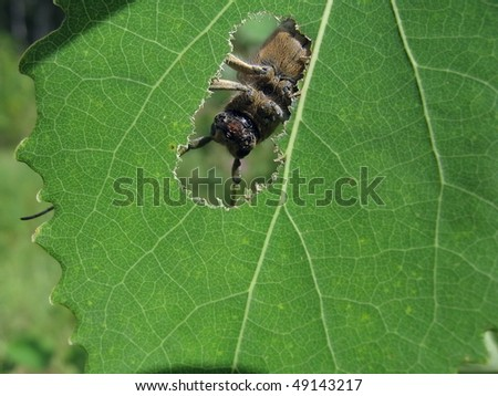 stock-photo-beetle-in-the-hole-49143217.jpg