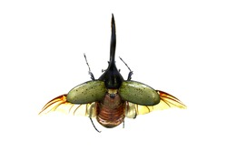beetle isolated, Set of realistic colorful tropical long horn beetle and insect, zoology,wild ,entomology, one alive exotic butterfly with beautiful wing collection ,insect animal stuff icon,teeth