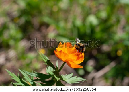 Beetle on a flower. Beautiful spring flowers in the forest. Spring flowering meadows. Forest of brightly coloured flowers. A bee on a flower. Beautiful spring flowers in the forest. Spring flowering m