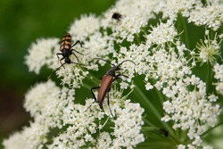 Beetles on a white flower in the forest. beetle sitting on a  flower close-up on a blurred background