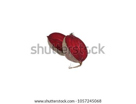 Beetroot beet table beet garden beet red beet half double vertical