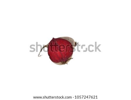 Beetroot beet table beet garden beet red beet half double vertical 2