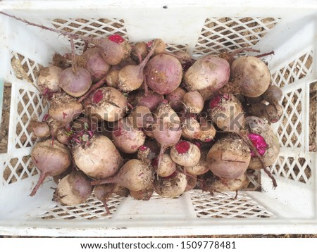 Beetroot freshly removed from the ground and put into a box for further sale. #1509778481
