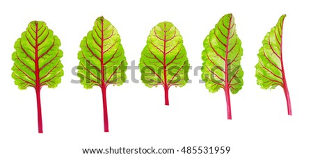 Beetroot leaves, fresh beet leaf set isolated on white background