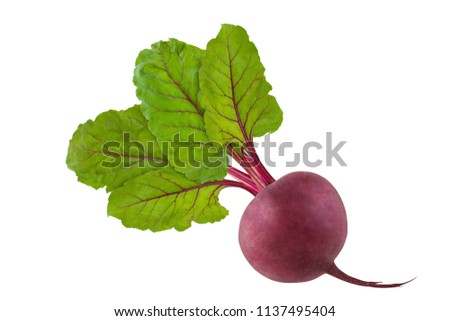 Beetroot with foliage. Isolated fresh beet with green beautiful leaves on white background.