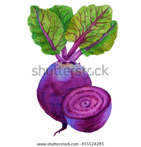 beets with leaves and half of the tuber. isolated on white background. watercolor illustration.