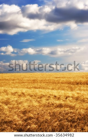 Before harvest - landscape photo from the countryside