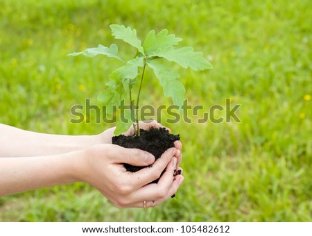 Beginning of new life. A young sprout of an oak in female hands.