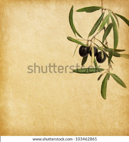 Beige background.  old paper  with black olives branches