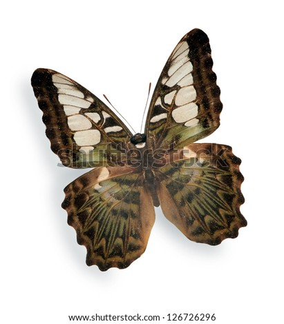 Beige butterfly isolated on white background