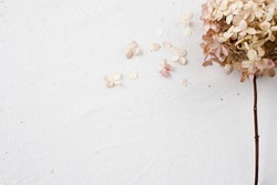 Beige floral flatlay on white background. Hydrangea, hortesia dried flowers top view. Pastel, natural colors. Vintage style.
