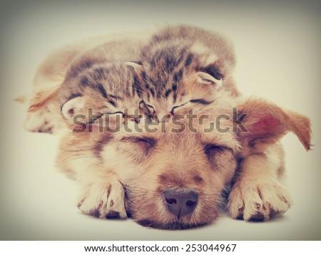 beige puppy and kittens sleeps