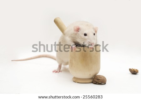 Beige rat with mortar