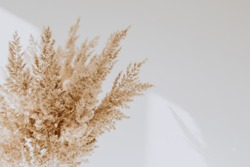 Beige reeds agains white wall. Beautiful background with neutral colors. Minimal, stylish, trend concept. Parisian vibes. Copy space, mock up.