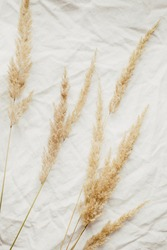 Beige reeds foliage branches bouquet on the grey linen bed. Beautiful pattern with neutral colors. Minimal, stylish, trend concept. Flat lay, top view. Мonochrome image
