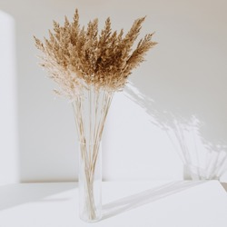 Beige reeds in vase standing on white table with beautiful shadows on the wall. Minimal, styled concept for bloggers. Parisian vibes.