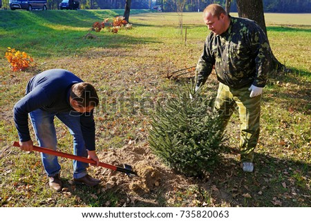 Belarus, Bobruisk district, the village Clear Forest, 17 October 2015: Two men planted young trees near the highway passing. #735820063