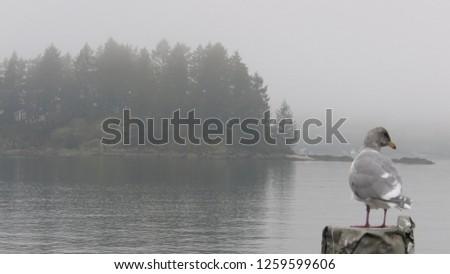 Belcarra regional park near Vancouver British Columbia Canada - 047