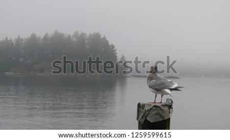 Belcarra regional park near Vancouver British Columbia Canada - 046