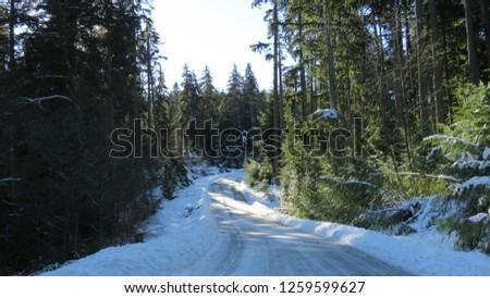 Belcarra regional park near Vancouver British Columbia Canada - 050