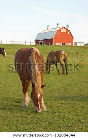 Belgian draft horses graze on a farm at Prophetstown State Park, Tippecanoe County, Indiana, with green grass and blue sky vertical