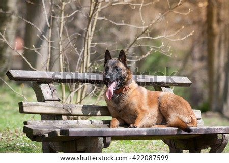 Free Animal Animal Photography Dog Dogs 95637 Stock Photo Avopix Com