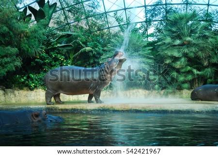 Belin zoo #542421967