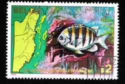 BELIZE - CIRCA 1982: A stamp printed in Belize shows fish , circa 1982