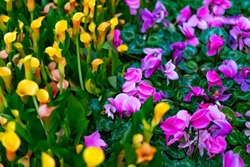 Bellagio Conservatory & Botanical Garden. floral background