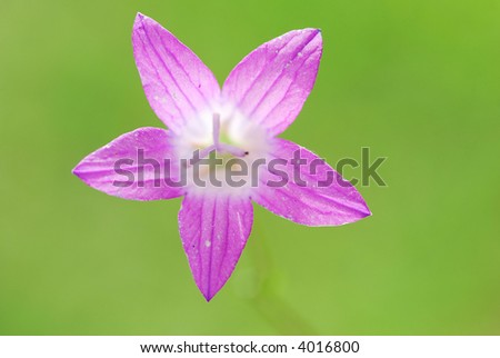 Bells flowers against a pastel coloured background