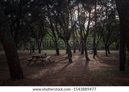 BENCH AND WOODEN TABLE TO MAKE PIC NIC IN A PINES FOREST, FINISHING ONE AUTUMN THE DAY