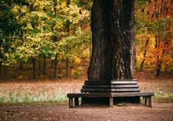 Bench around a tree in autumn park