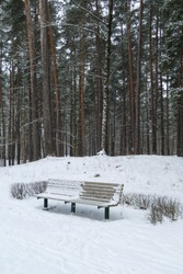 Bench covered with snow in the park. Pine trees around, it's snowing.