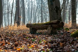 bench in autumn park, bench in the forest, bench in autumn forest, bench in the woods