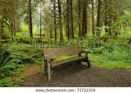 bench in hoh rain forest in olympic national park, washington, usa