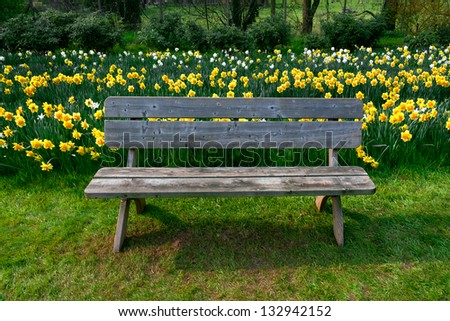 Bench in the park. Group of yellow Narcissus. Spring landscape.