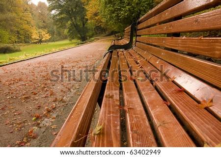 Bench in the park in autumn season
