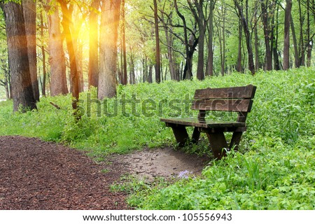 Bench in the park with sunshine