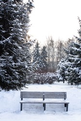 Bench in the public park in winter. Fir. Christmastrees. Snow