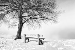 bench on a foggy and snowy winter day