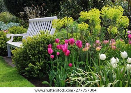 Bench seat in an english garden with shrubs, plants and colourful tulips #277957004