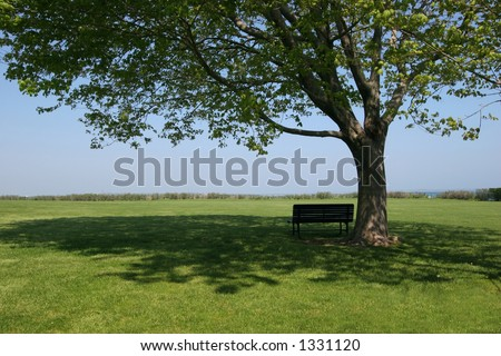 bench sitting in shade under tree